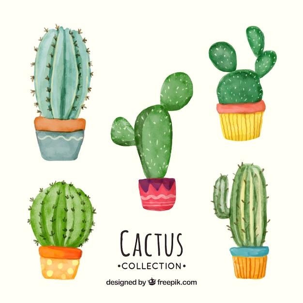 Spaß satz von aquarell kaktus Kostenlosen Vektoren