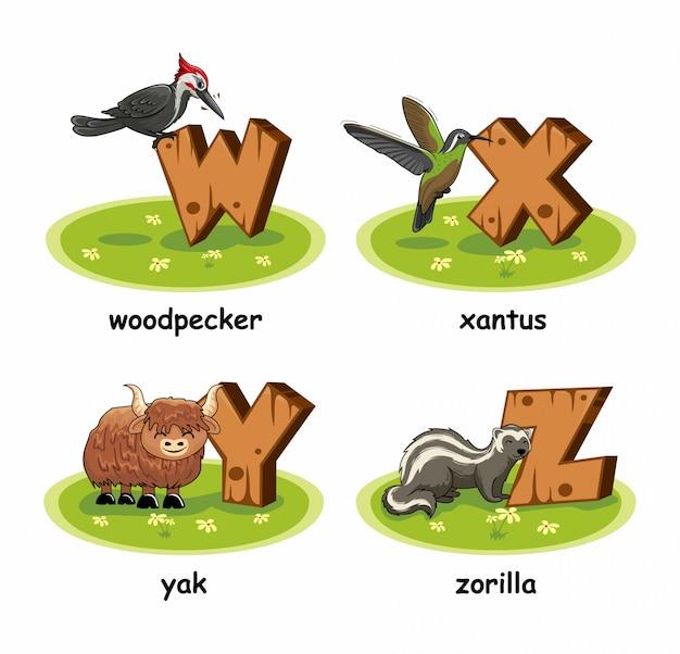 Specht xantus vogel yak zorilla holz alphabet tiere Premium Vektoren