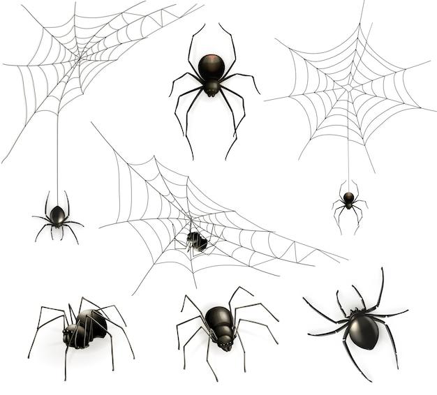 Spinnen und spinnennetz-set Premium Vektoren