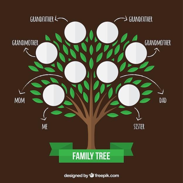 Stammbaum mit grünen blättern und pfeile Kostenlosen Vektoren
