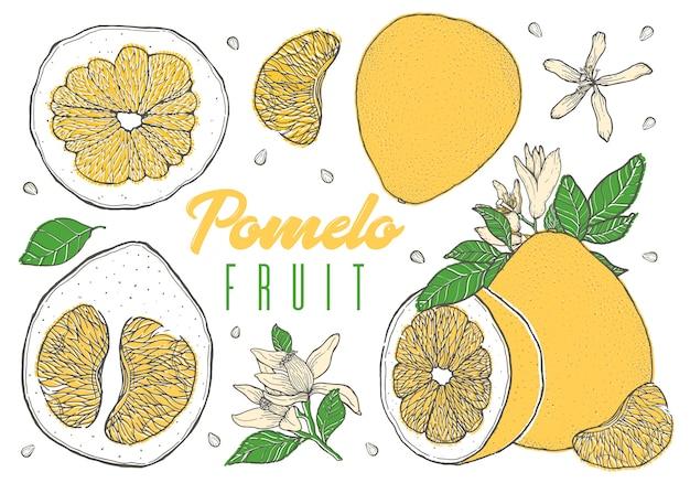 Stellen sie bunte hand gezeichnete pampelmusenfrucht ein. Premium Vektoren