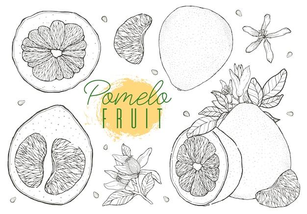 Stellen sie vektorhand gezeichnete pampelmusenfrucht ein Premium Vektoren