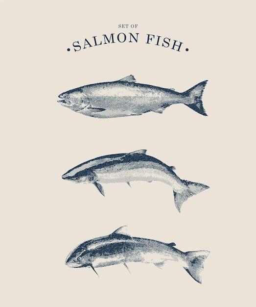 Strichgrafik-satz lachsfisch-illustration im weinlesestil Premium Vektoren