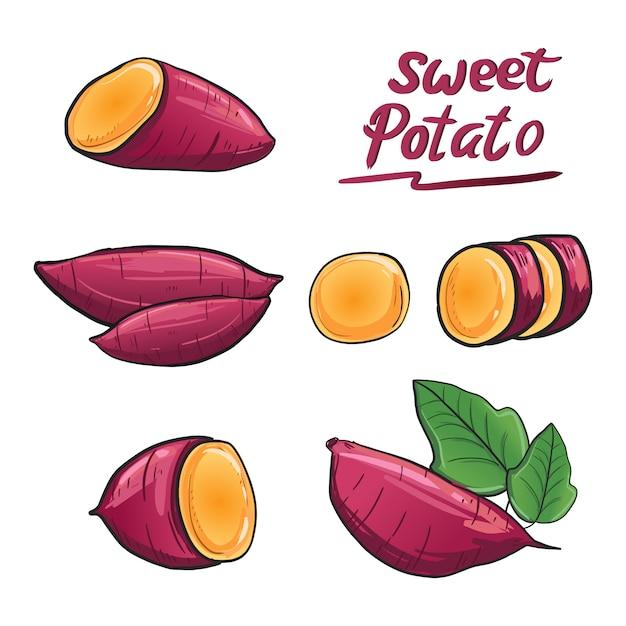 Süßkartoffel illustrationsvektor in der purpurroten wurzelfarbe. Premium Vektoren