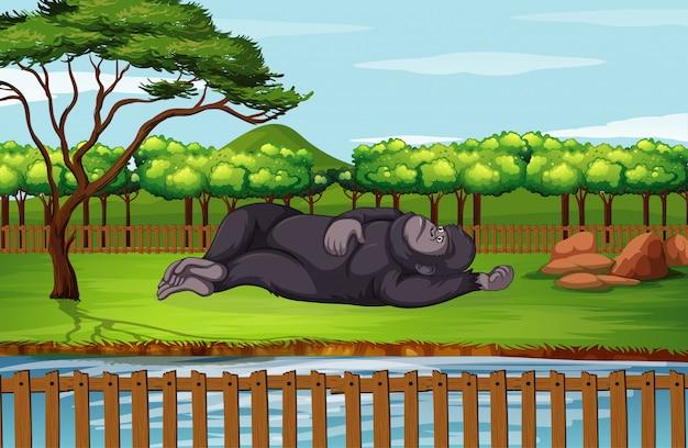 Szene mit gorilla im zoo Kostenlosen Vektoren
