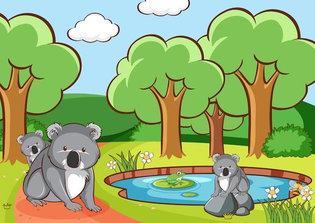 Szene mit koala im park Kostenlosen Vektoren