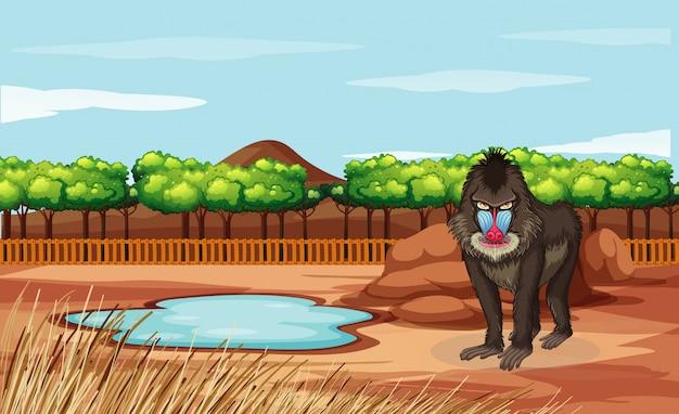 Szene mit pavian im zoo Kostenlosen Vektoren
