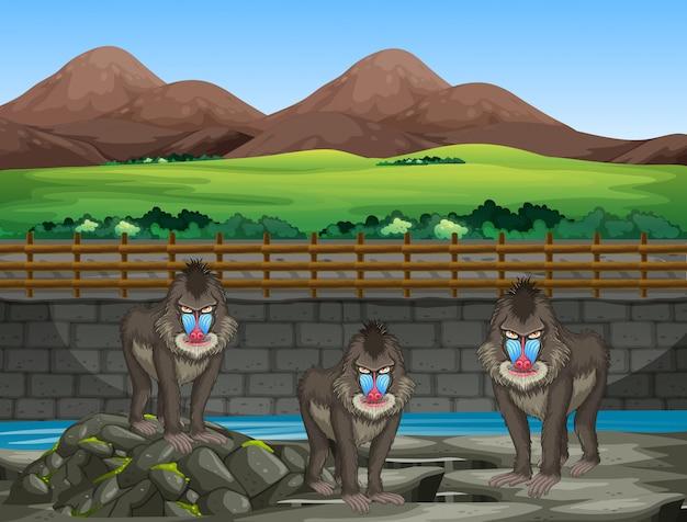 Szene mit pavianen im zoo Premium Vektoren