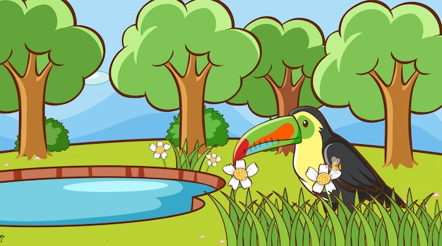 Szene mit tukanvogel im park Kostenlosen Vektoren