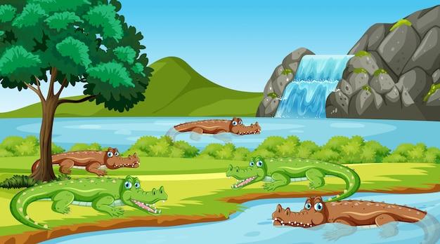 Szene mit vielen krokodilen im fluss Premium Vektoren