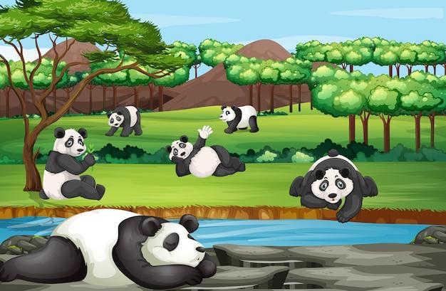 Szene mit vielen pandas im offenen zoo Kostenlosen Vektoren