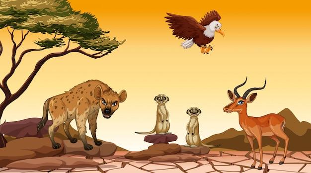 Szene mit vielen tieren auf dem gebiet Premium Vektoren