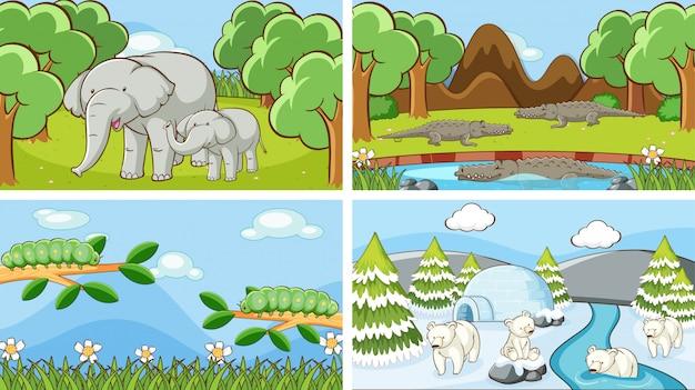 Szenen von tieren in freier wildbahn Kostenlosen Vektoren