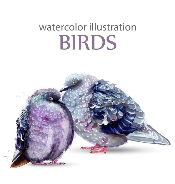 Tauben vögel aquarell Premium Vektoren