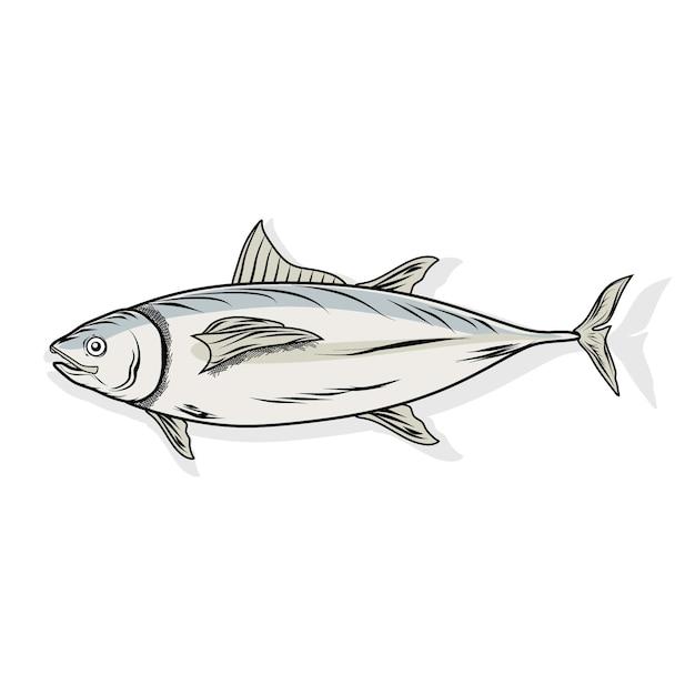 Thunfisch auf weiß Premium Vektoren