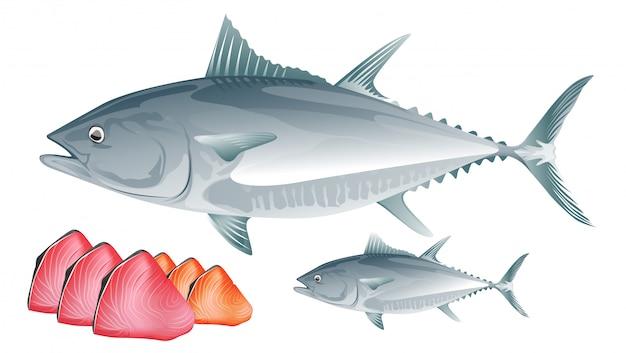 Thunfisch Premium Vektoren