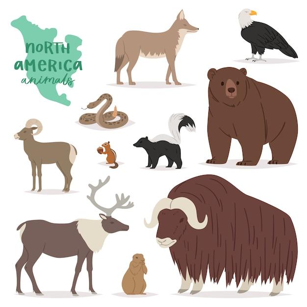 Tier animalischer charakter im wald tragen hirschelch in amerika-tierartillustrationssatz des amerikanischen raubtier-bergziegens lokalisiert auf weißem hintergrund Premium Vektoren