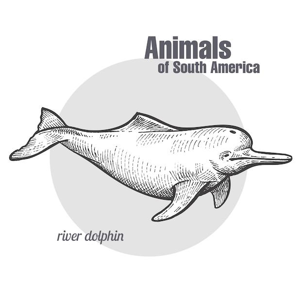 Tier des südamerika-flussdelphins. Premium Vektoren