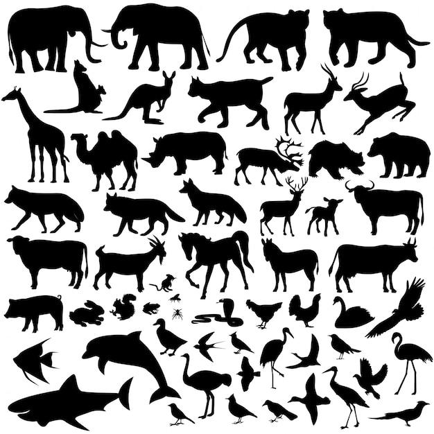 Tiere Premium Vektoren