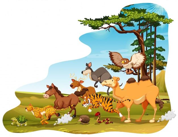 Tierwelt Kostenlosen Vektoren