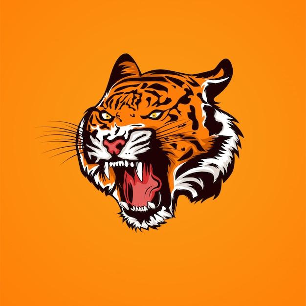 Tigerkopf öffnet den mund und zeigt die abbildung der reißzähne Premium Vektoren