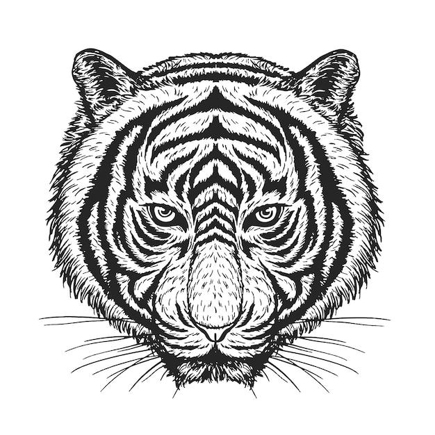 Tigervektorzeichnung auf weiß. Premium Vektoren