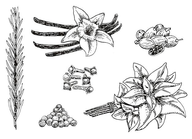 Tinte handgezeichnete küchenkräuter und gewürze festgelegt Premium Vektoren