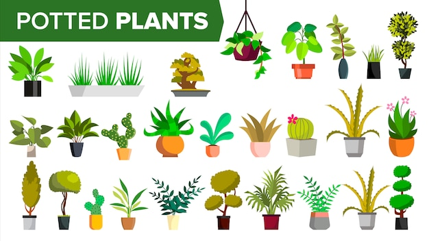 Topfpflanzen Premium Vektoren