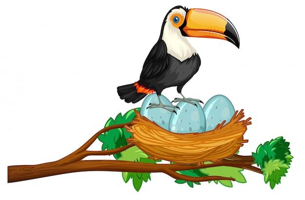 Toucan sitzt auf nest von eiern Kostenlosen Vektoren