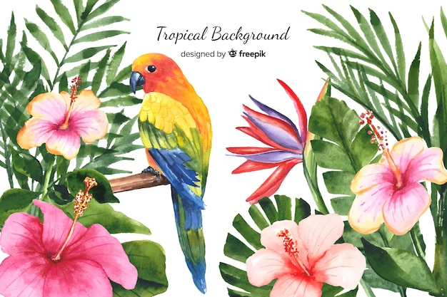 Tropische anlagen des aquarells und vogelhintergrund Kostenlosen Vektoren