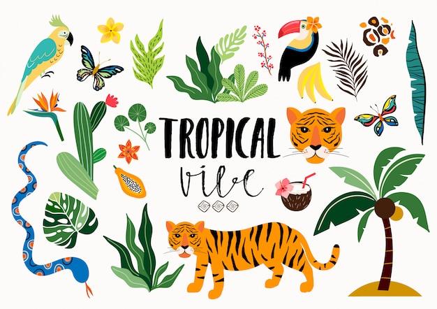Tropische ansammlung mit den verschiedenen elementen getrennt Premium Vektoren