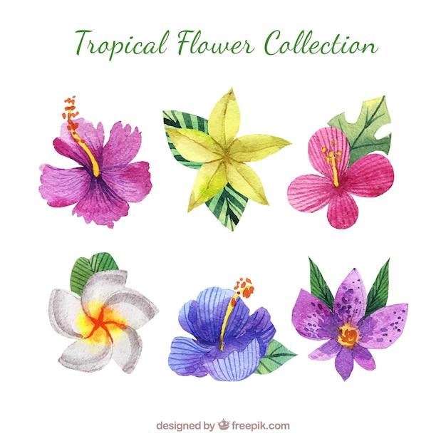 Tropische blume collectio des reizenden aquarells Kostenlosen Vektoren