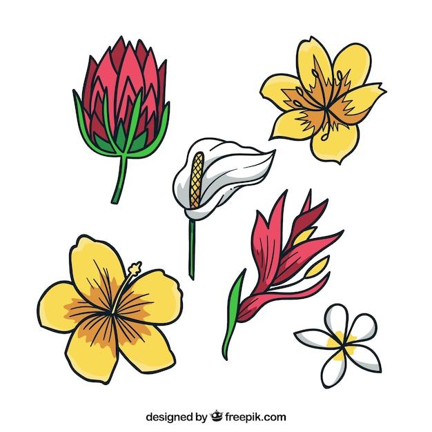 Atemberaubend Hibiskus Blume Färbung Seite Bilder - Entry Level ...
