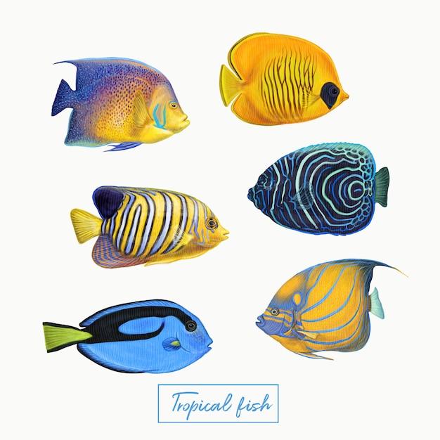 Tropische bunte fische Premium Vektoren