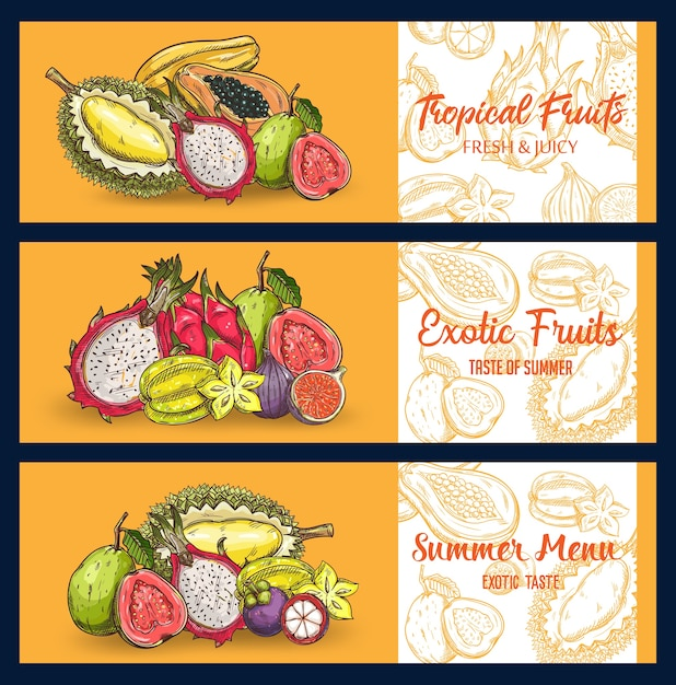 Tropische früchte skizzieren banner. pitahaya, mangostan mit papaya, feigen, durian und carambola, guave, litschi und passionsfrucht. graviertes sommermenü mit exotischen bio-früchten, natürliche, gesunde wahl Premium Vektoren