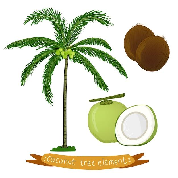 Tropische kokosnuss-palme Premium Vektoren