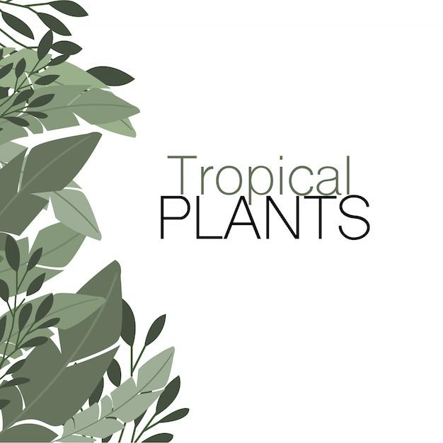 Tropische pflanzen Kostenlosen Vektoren
