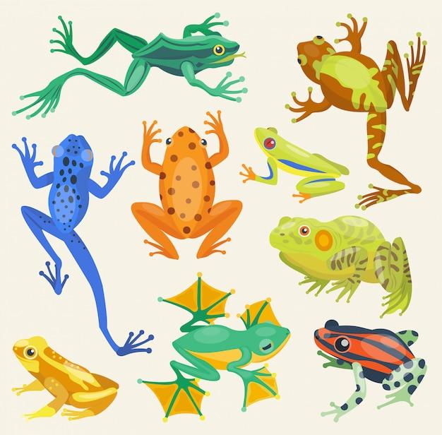 Tropische tierillustration der froschkarikatur isolierte natur Premium Vektoren