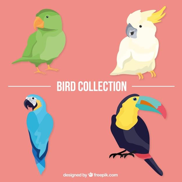 Tropische vögel packen Kostenlosen Vektoren