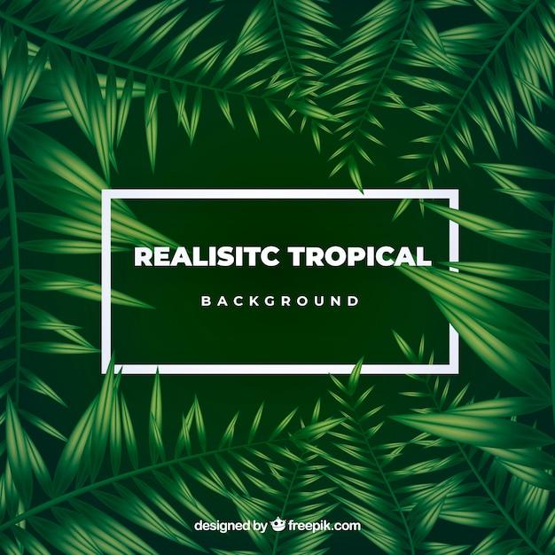 Tropischer blatthintergrund Kostenlosen Vektoren