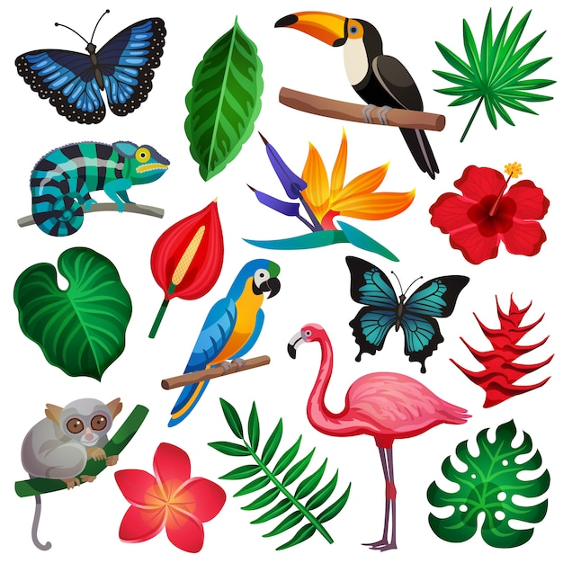 Tropischer exotischer ikonensatz Kostenlosen Vektoren