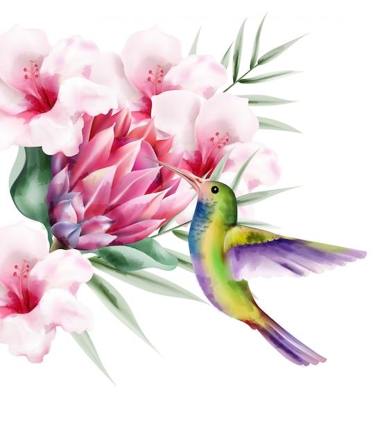 Tropischer paradiesvogel des aquarells mit bunten federn Kostenlosen Vektoren