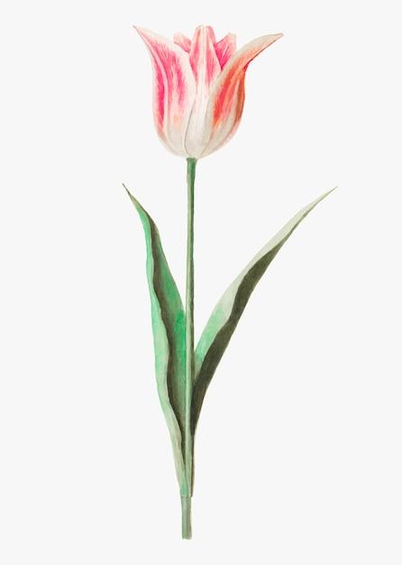 Tulpe im vintage-stil Kostenlosen Vektoren