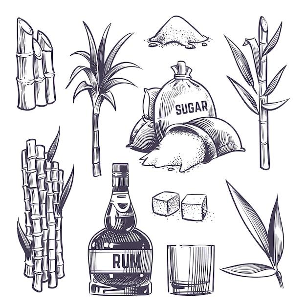 Übergeben sie gezogene rohrblätter, zuckerpflanzenstiele, zuckerrohrbauernhofernte, glas und flasche rum. vektor in vintage gravur stil festgelegt Premium Vektoren