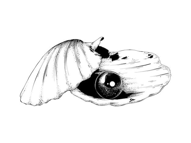 Übergeben sie gezogene skizze der muschel mit perle im
