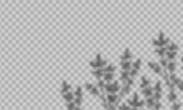 Überlagerung schatteneffekt. mit weichem licht und verschwommenen schatten von pflanzen Premium Vektoren