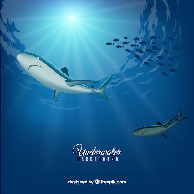 Unterwasserhintergrund mit haifischen in der realistischen art Kostenlosen Vektoren