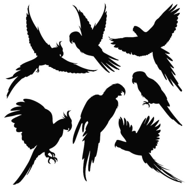 Vector papageien, amazonas-dschungelvogelschattenbilder, die auf weiß lokalisiert werden Premium Vektoren