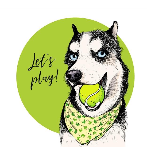 Vector porträt des hundes des sibirischen huskys mit tennisball. Premium Vektoren