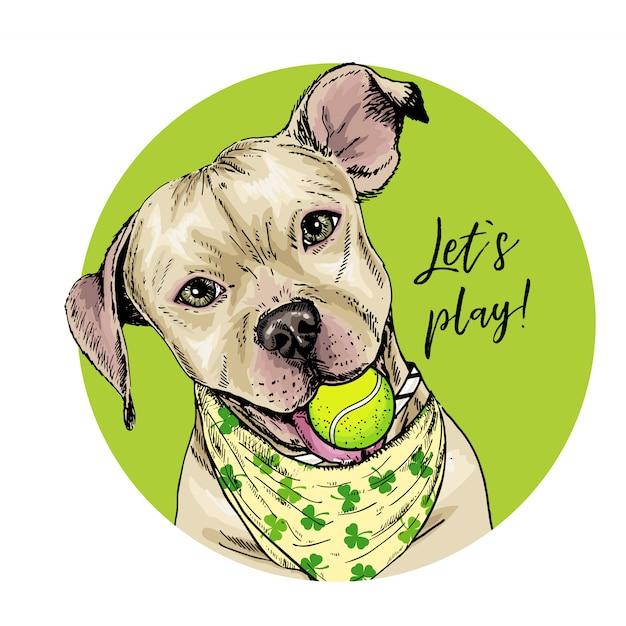 Vector porträt des pitbullterrierhundes mit tennisball. sommer-abbildung. Premium Vektoren